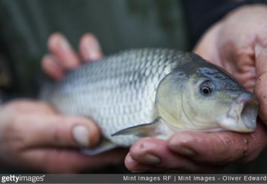 Pêche à la carpe en hiver : possible?
